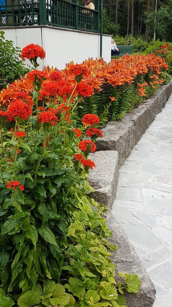 punaisia ja oransseja kukkia
