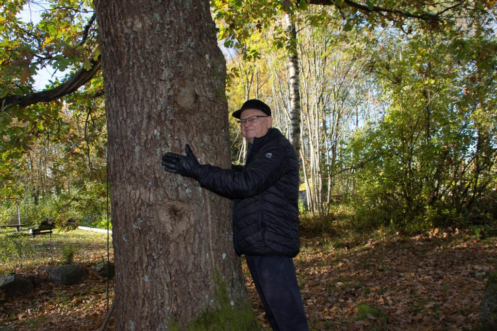 mies halaa puuta, kädet eivät yllä puun ympäri