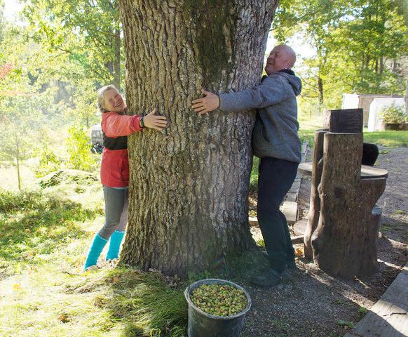 nainen ja mies halaavat suurta tammea